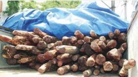 redwood-smuggling