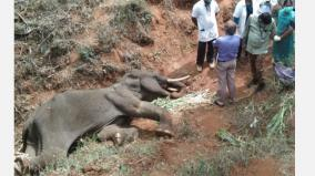 expert-committee-formed-to-analyse-elephant-deaths
