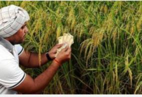 farmers-frustrated-by-crop-stagnation-warning-of-food-shortages