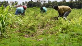 subsidy-for-organic-farming-horticulture-department-invites-farmers