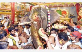 lakshmi-elephant-returns-to-manakula-temple