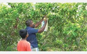 mba-graduate-sells-guava