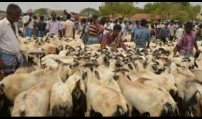 bakrith-festival-government-should-give-permission-for-sale-of-qurbani-goats-tamil-nadu-muslim-league-demand