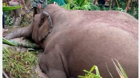 who-is-responsible-for-the-elephants-dying-in-the-mud-ecologists-grieve-over-the-forest