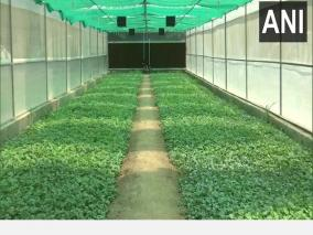new-high-tech-poly-houses-constructed-in-j-k-to-boost-vegetable-cultivation