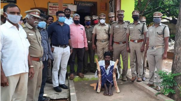 male-elephant-dead-near-hosur-farmer-arrested-for-burying-ivory