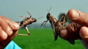 locust-control-operations-carried-out-in-more-than-4-lakh-hectares-area-in-10-states-till-23rd-july-2020