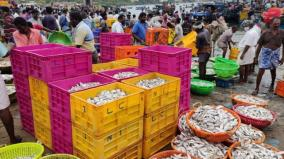 karal-fish-caught-in-large-scale-fishermen-express-happiness