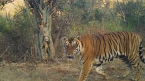 environment-activists-urges-to-protect-tigers