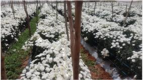 flower-prices-double-triple-in-hosur-market-ahead-of-varalakshmi-fast-flower-growers-happy