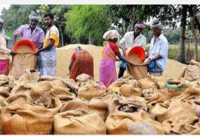 paddy-procurement-centers-not-yet-open-in-kumari-as-harvest-approaches