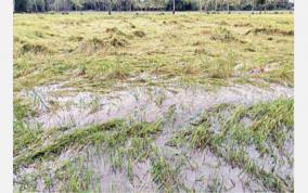 rain-in-delta-districts