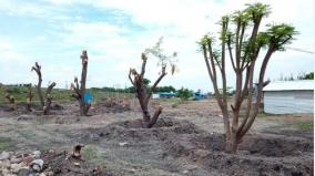 new-lease-of-life-for-46-trees-in-virudhunagar