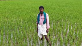 the-story-of-a-farmer-who-influenced-80-farmers-to-practice-traditional-farming