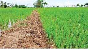 total-13-92-increase-in-sowing-area-coverage-of-kharif-crops-in-comparison-to-last-year