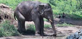 arisi-elephant