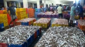 kumari-fishermen-get-good-fish-harvest