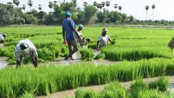 no-regulations-formulated-for-protected-special-agricultural-zone-government-tells-hc