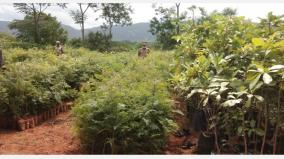 25-thousand-saplings-free-of-cost-to-villagers-in-hosur-forest-reserve-forest-department