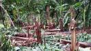 vadakarai-plaintain-farms-washed-away-by-rains-farmers-seek-relief-from-government