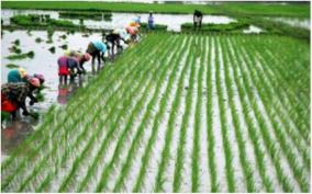 area-covered-under-rice-47-60-lakh-ha-more-and-under-oilseeds-24-33-lakh-ha-more-in-comparison-to-last-year