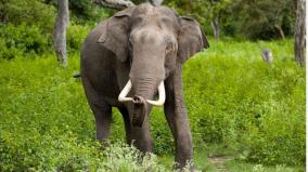 elephant-kills-forest-official-in-courtallam