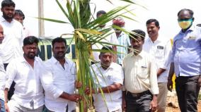 karaikudi-80-acres-seemai-karuvela-trees-uprooted-on-the-eve-of-independence