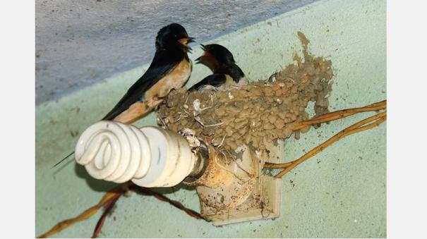 nature-enthusiasts-bird-enthusiasts