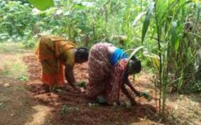 horticulture-department-announces-special-subsidy-for-women-farmers-to-boost-organic-farming