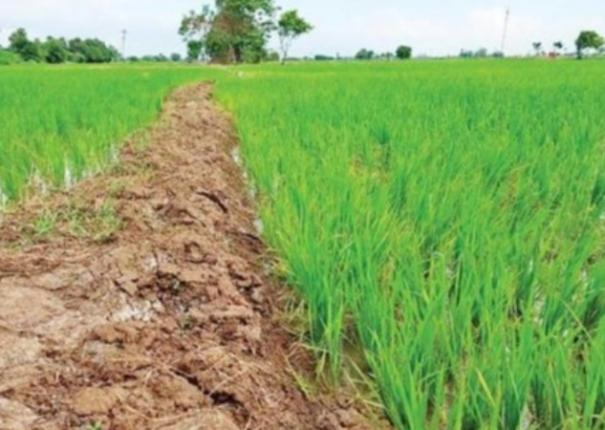 sowing-area-coverage-under-kharif-crops-8-56-more-compared-to-corresponding-period-of-last-year
