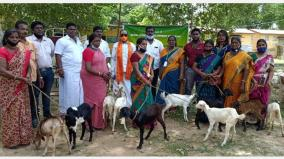 inexpensive-goats-for-landless-rural-poor-women-central-government-scheme-to-promote-rural-economy