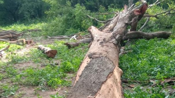 tree-smuggling-near-ambur