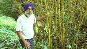 punjab-man-grows-bamboo-in-home