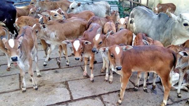 cow-sales
