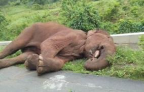 elephant-died-in-kerala-border