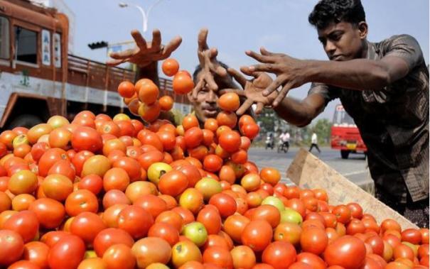 tomato-price-increase
