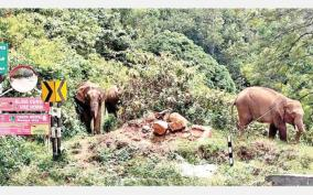 elephants-roam-the-coonoor-hills