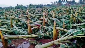 high-rain-causes-farmers-suicide