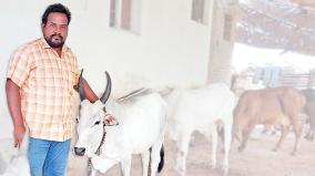 mba-graduate-in-cow-breeding