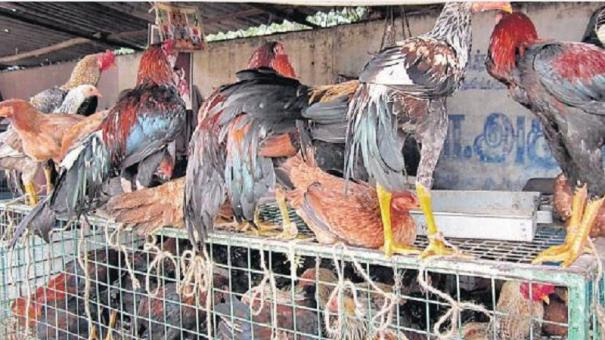 tenkassi-women-being-given-free-hens-or-rearing