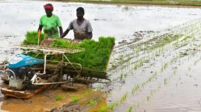madurai-paddy-cultivation-land-increases