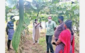 how-to-protect-pandal-vegetables-from-disease-attack