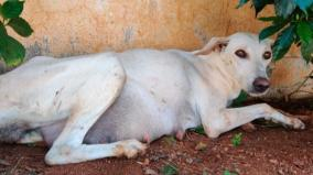madurai-good-hearted-people-help-street-dog