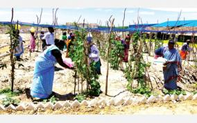 horticultural-farm