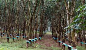 state-rubber-corporation-assets-handed-over-to-forest-department-workers-livelihoods-threatened