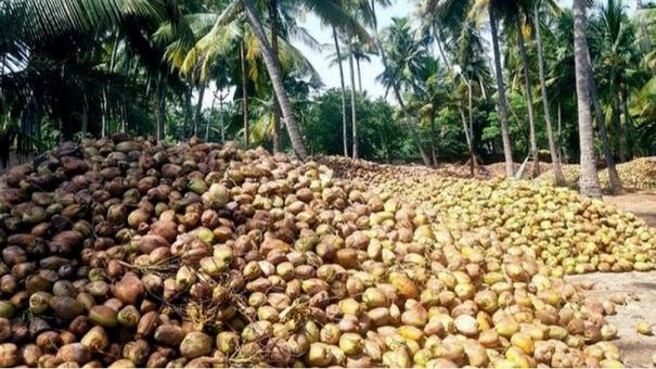 madurai-coconuts-get-good-market-in-north-india