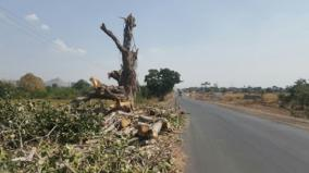 don-t-fell-tress-if-you-are-not-able-to-plant-10-trees-for-1-felled-tree-hc