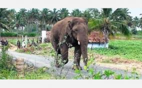 elephant-that-trampled-the-plus-2-student