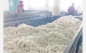 decline-in-silk-production