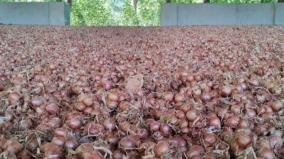 vilathikulam-farmers-gear-up-for-onion-cultivation